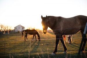 New Ministerial Instructions: Moratorium on Self-Employed (Farm Management)
