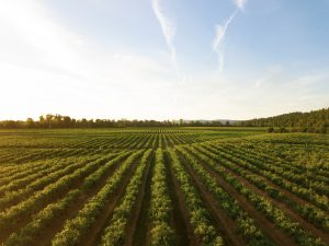 Update On Opening Of Agri-Food Immigration Pilot